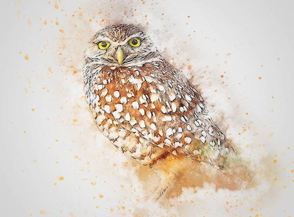 Painting - Owl Watercolour 1 by Joy of Life Arts Gallery