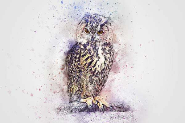 Painting - Owl Watercolour 2 by Joy of Life Arts Gallery