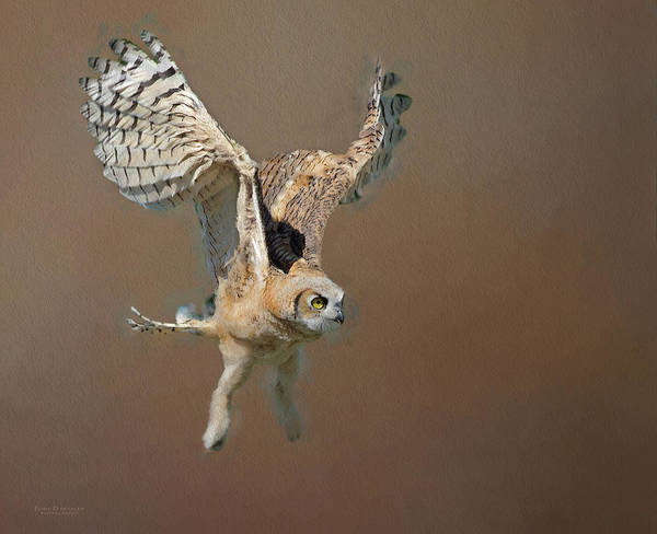 Digital Art - Owlet First Flight by Judi Dressler