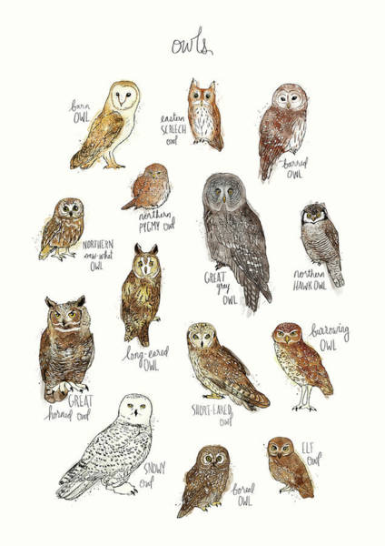 Fauna Wall Art - Painting - Owls by Amy Hamilton