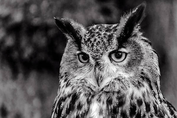 Photograph - Owls Eyes  by Cliff Norton