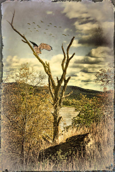 Photograph - Owls Roost by Chris Lord