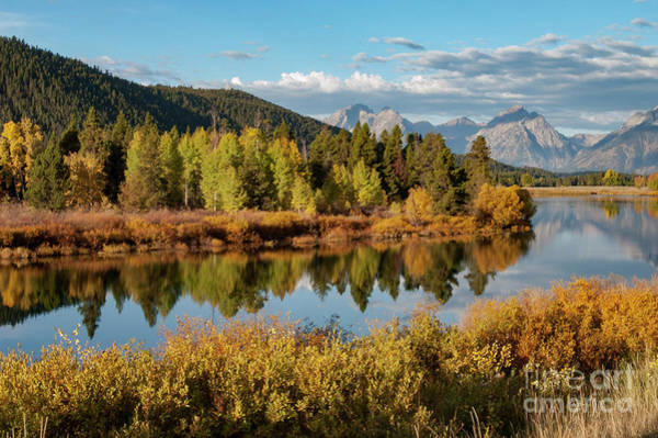 Photograph - Oxbow Bend And Snake River by Bob Phillips