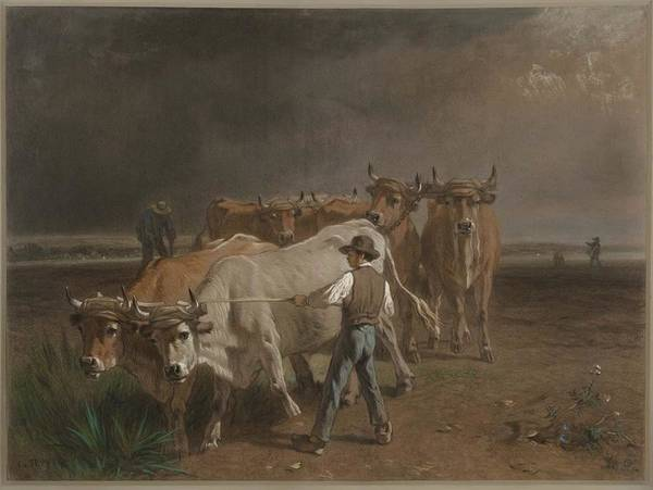 Ploughing Painting - Oxen Ploughing Constant Troyon by MotionAge Designs