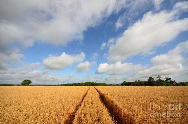 Wheat Photograph - Oxfordshire by Smart Aviation