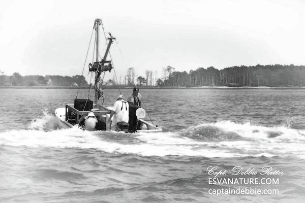 Photograph - Oystermen by Captain Debbie Ritter