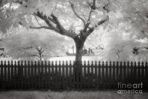 Photograph - Oysterville Tree by Craig J Satterlee