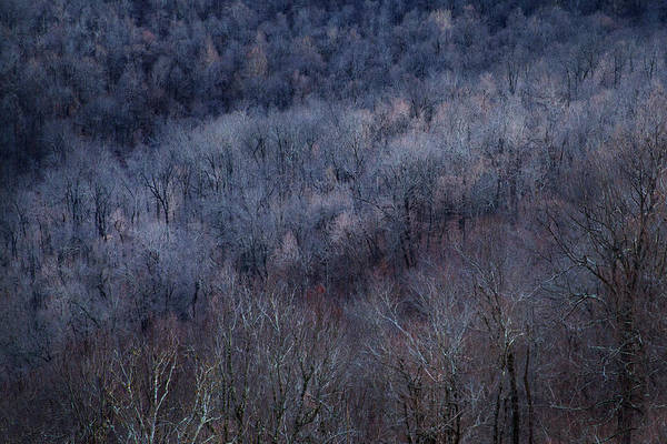 Photograph - Ozark Trees #3 by David Chasey