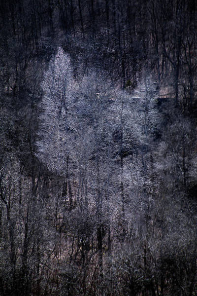 Photograph - Ozarks Trees #6 by David Chasey