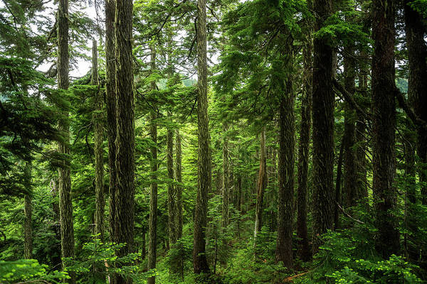 Pnw Wall Art - Photograph - Pacific Northwest Forest by Pelo Blanco Photo