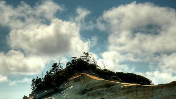 Photograph - Pacific City Treeline 6205 by Jerry Sodorff