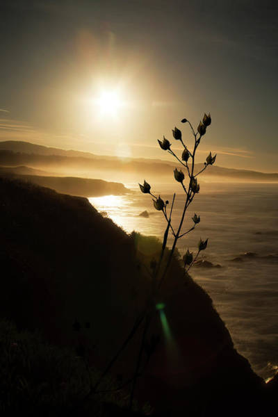 Photograph - Pacific Coast by Wes Jimerson