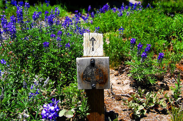 Wall Art - Photograph - Pacific Crest Trail Marker by David Lee Thompson