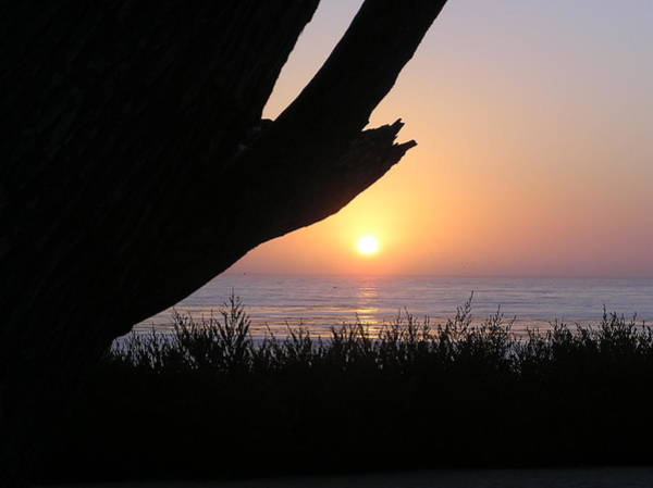 Pacific Cypress Sunset Art Print by Richard Mansfield