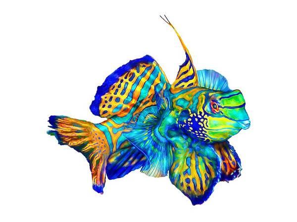 Wall Art - Mixed Media - Pacific Mandarinfish by David Wagner