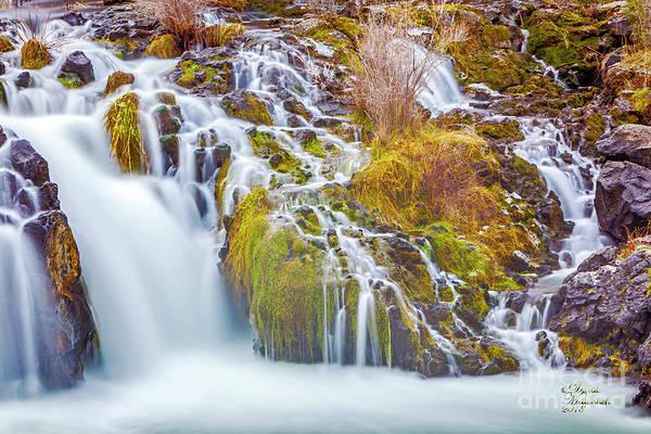 Photograph - Pacific Northwest by David Millenheft