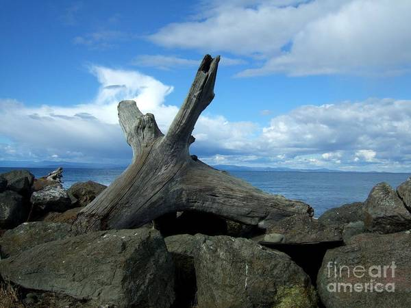 Photograph - Pacific Northwest Seascape With Driftwood And Rocks  by Delores Malcomson