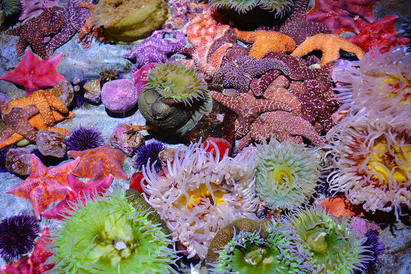 Pacific Ocean Reef Art Print