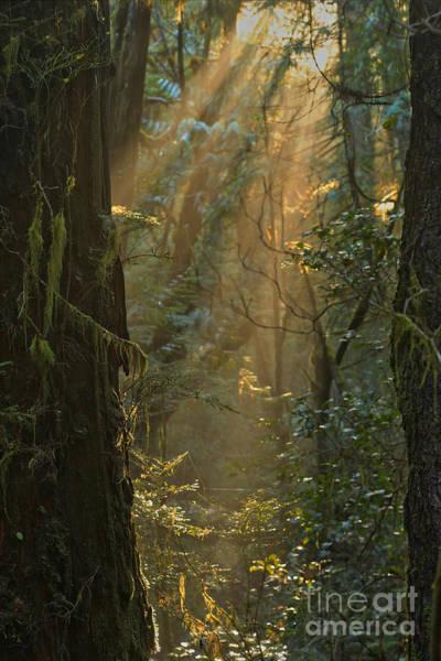 Photograph - Pacific Rim Light Beams by Adam Jewell