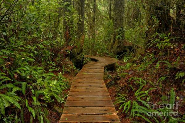 Photograph - Pacific Rim National Park Boardwalk by Adam Jewell