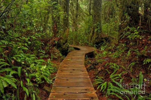 Photograph - Pacific Rim Rainforest Trail by Adam Jewell