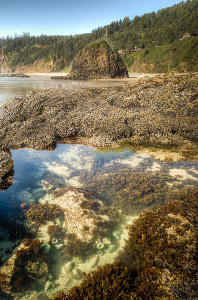 Wall Art - Photograph - Pacific Tidal Pond by Drew Castelhano