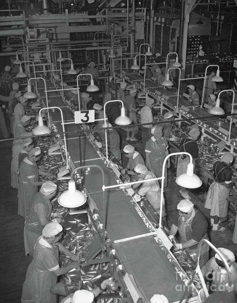 Photograph - Packing Tables At Del Monte Packing  California Packing Corporation 1949 by California Views Archives Mr Pat Hathaway Archives