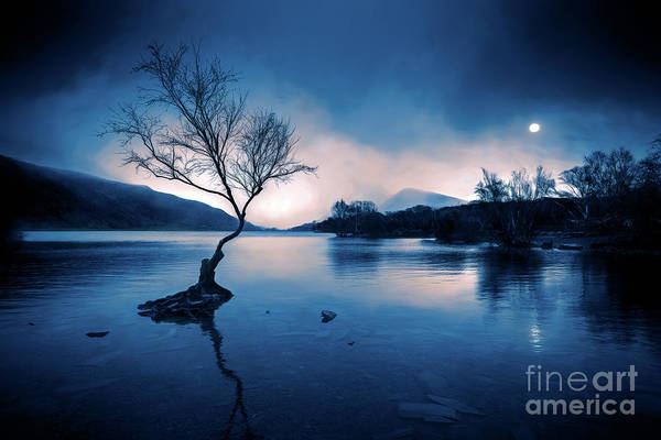 Wall Art - Photograph - Padarn Tree Snowdonia by Adrian Evans