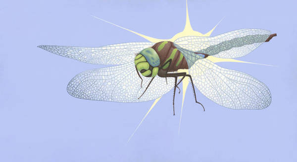 Wall Art - Painting - Paddle-tailed Darner by Nathan Marcy