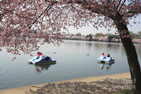 Photograph - Paddleboating Past The Cherry Blossoms In Washington Dc by William Kuta