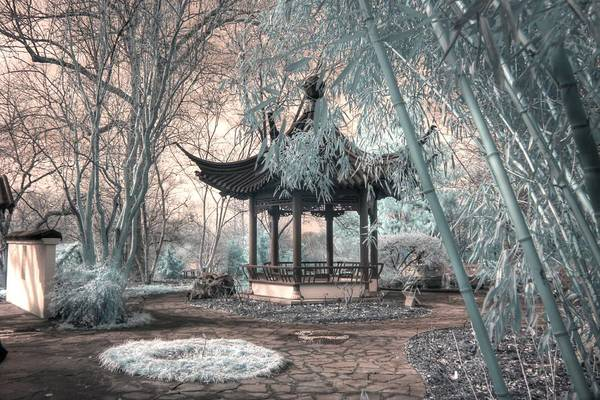 Mediation Photograph - Pagoda Bamboo Chinese Garden Infrared by Jane Linders