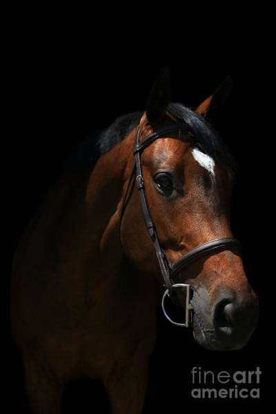 Photograph - Paige-lacey3 by Life With Horses