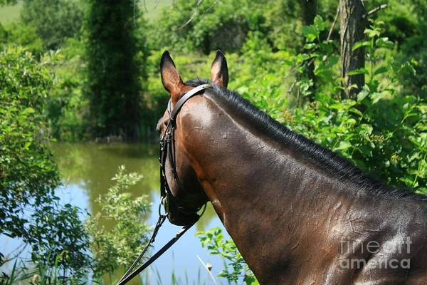 Photograph - Paige-lacey44 by Life With Horses