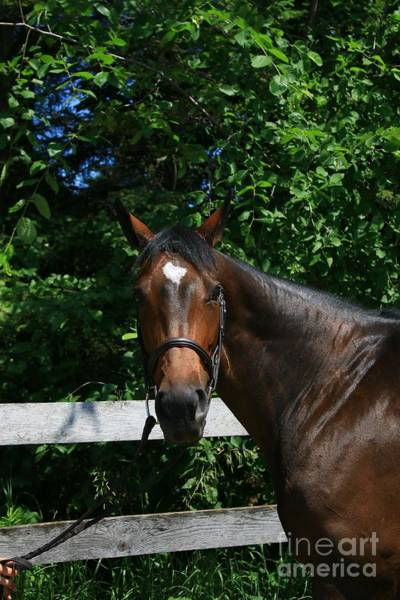 Photograph - Paige-lacey9 by Life With Horses