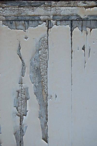 Photograph - Paint Appeal 3 by Jani Freimann