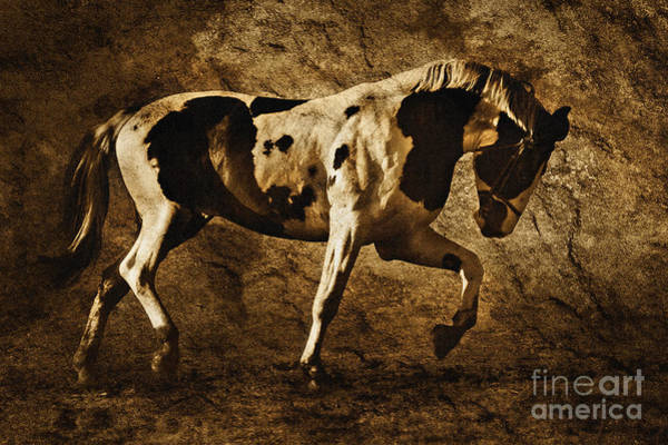 Photograph - Paint Horse by Dimitar Hristov