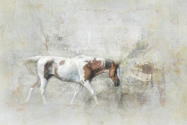 Photograph - Paint Horse On The Farm by Jai Johnson