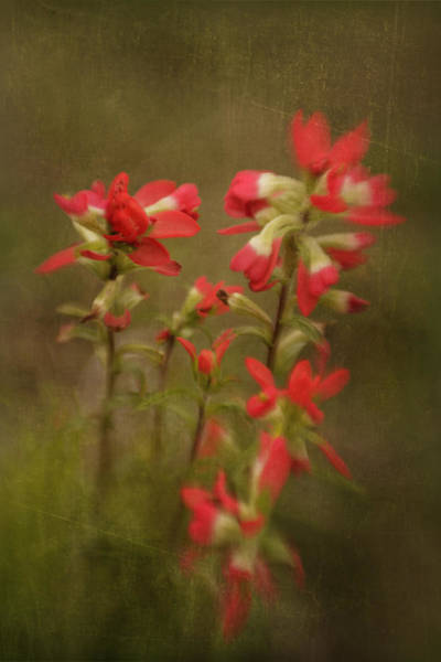 Photograph - Paintbrush by Charles McKelroy