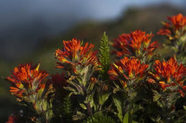 Photograph - Paintbrush by Robert Potts