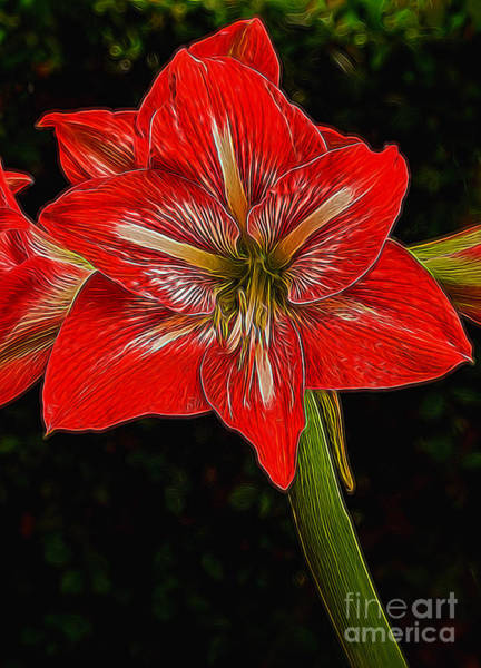 Photograph - Painted Amaryllis by Dave Bosse