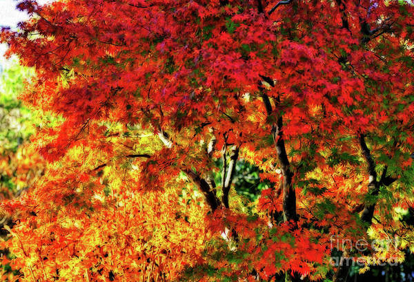 Wall Art - Photograph - Painted Autumn By Kaye Menner by Kaye Menner
