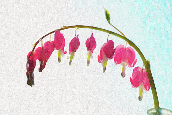 Photograph - Painted Bleeding Heart by Sue Collura