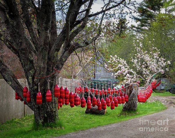 Photograph - Painted Buoys, New Harbor, Maine  -60062 by John Bald