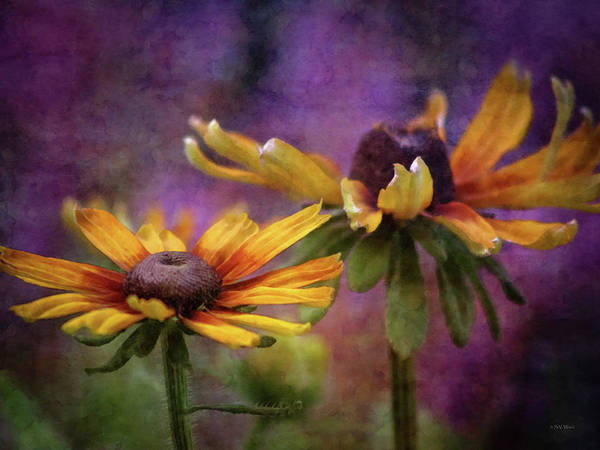 Painted By The Sun 2757 Idp_2 Art Print