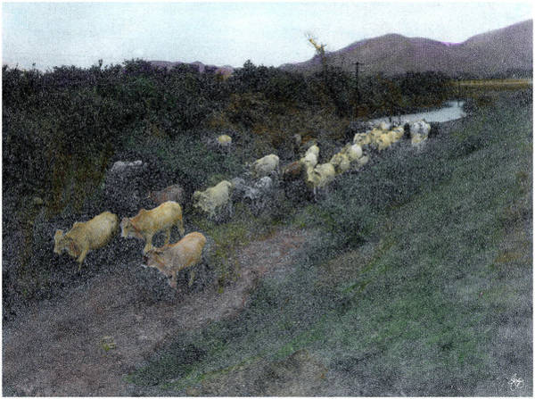 Photograph - Painted Cattle Mexico by Wayne King