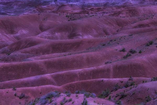 Petrified Forest Photograph - Painted Desert Azorina by Garry Gay