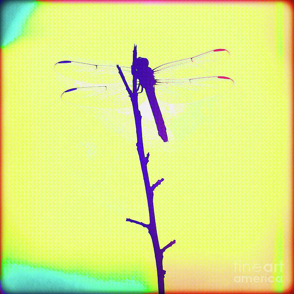 Wall Art - Painting - Painted Dragonfly I by Chris Andruskiewicz