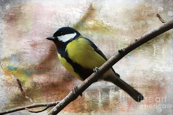 Twitcher Wall Art - Photograph - Painted Great Tit by Clare Bevan