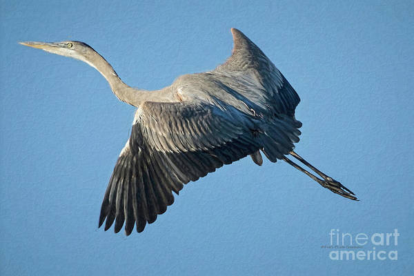 Wall Art - Painting - Painted Heron by Deborah Benoit