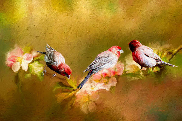 Photograph - Painted House Finches by Ericamaxine Price